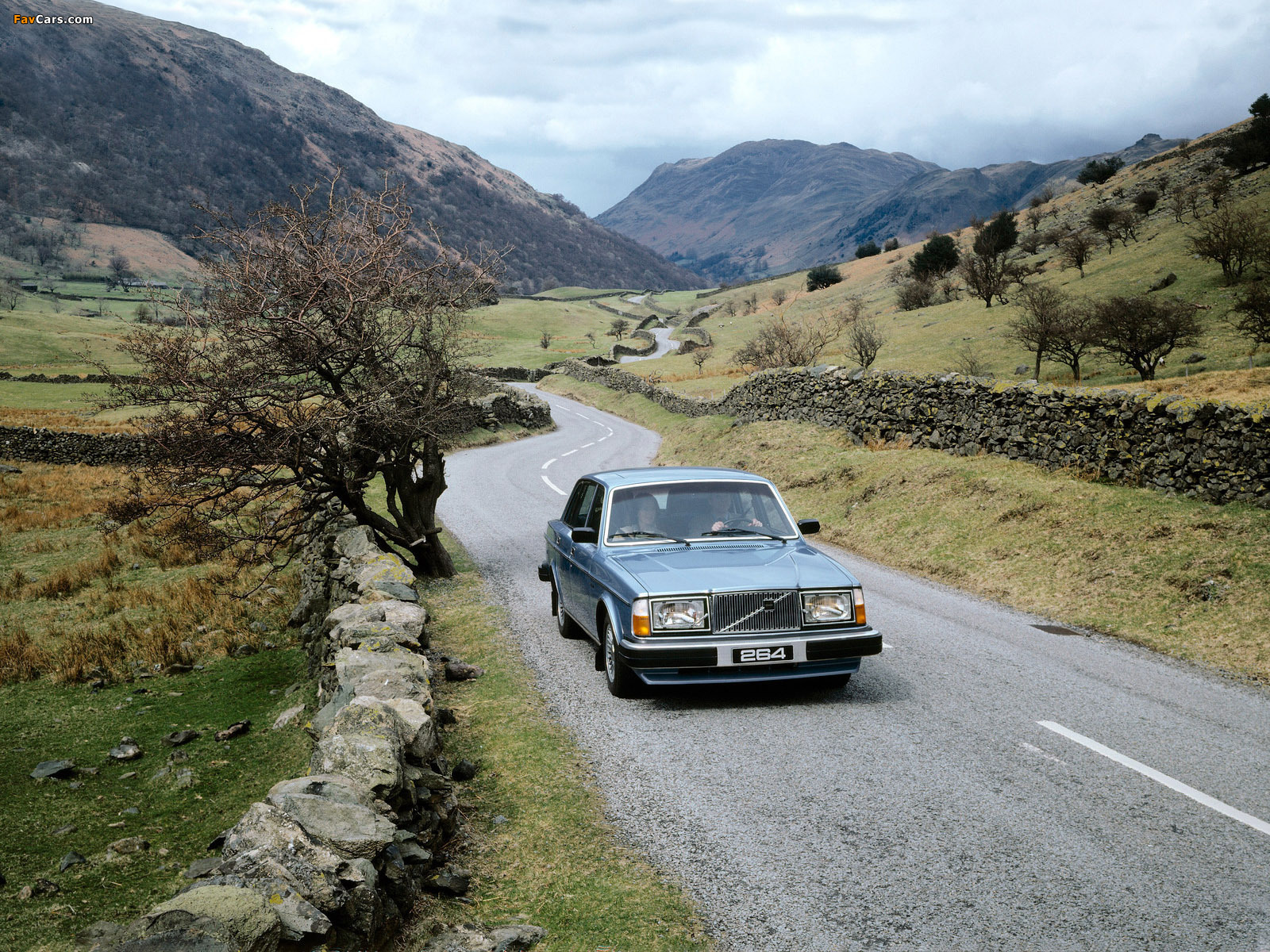 Pictures of Volvo 264 GLE 1980–82 (1600 x 1200)