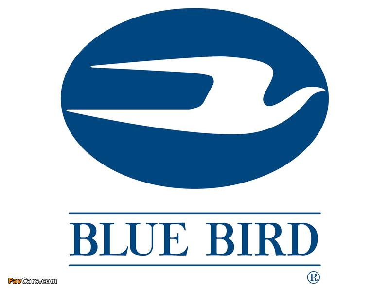 Images of Blue Bird (800 x 600)