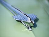 Buick Special Estate Wagon (49) 1941–1942 photos