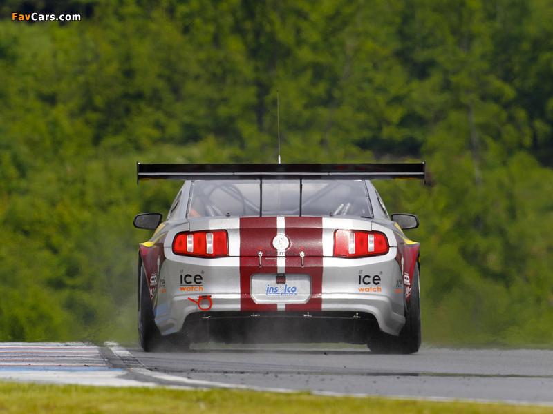 Mustang GT3 2010 photos (800 x 600)
