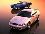 Mustang photos