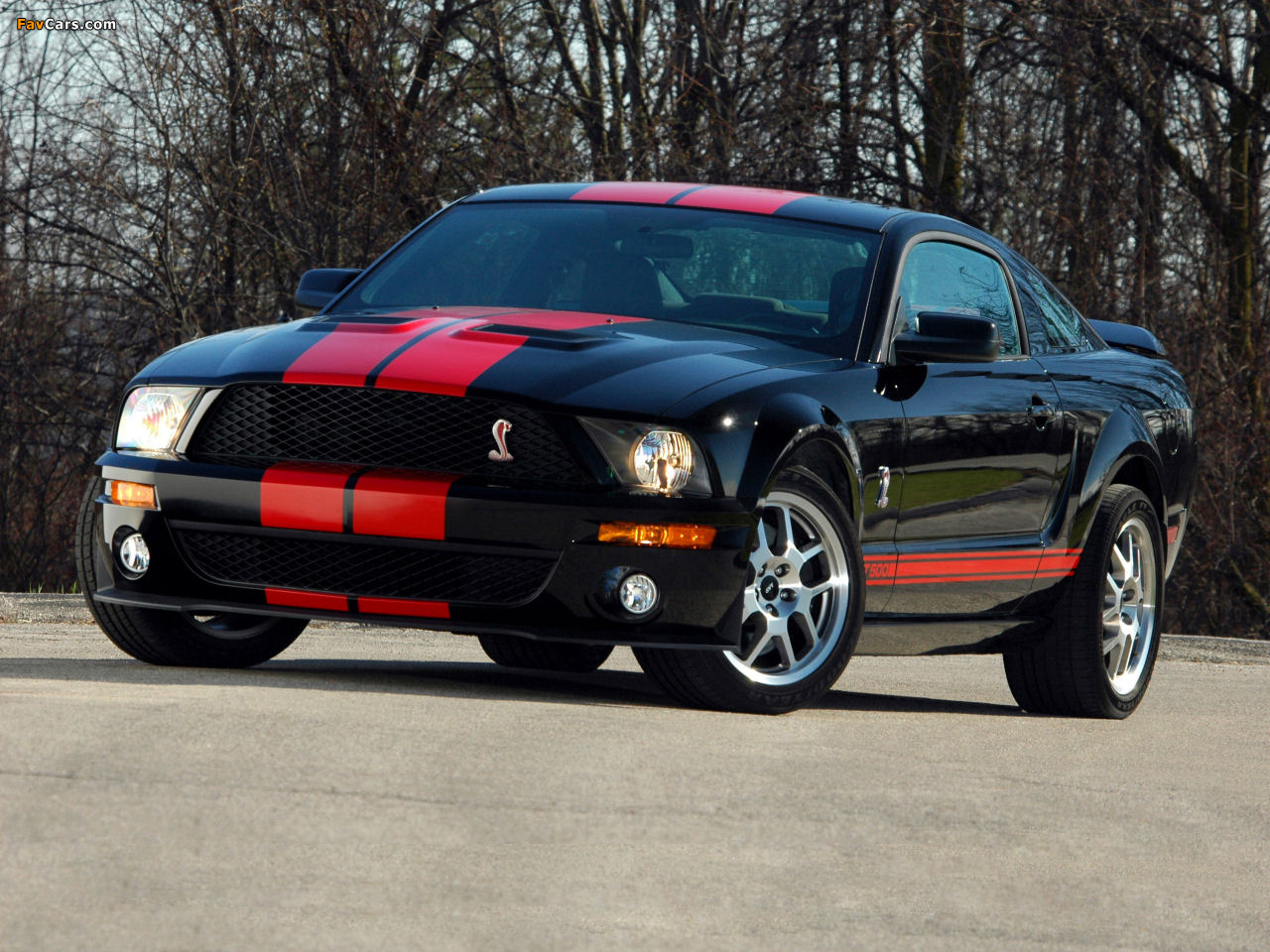 Photos of Shelby GT500 Red Stripe Appearance Package 2007 (1280 x 960)