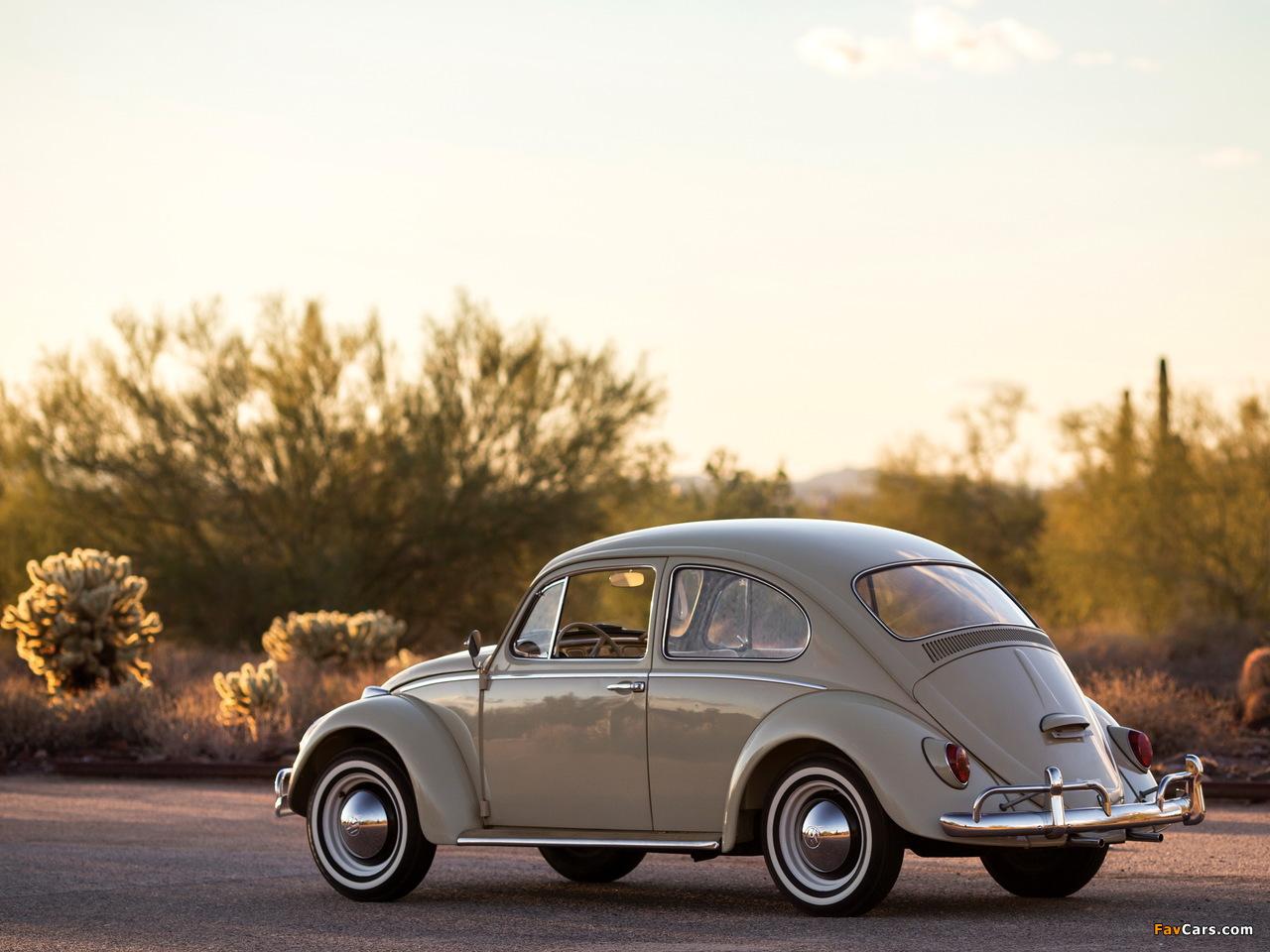 Photos of Volkswagen Beetle North America 1965 (1280 x 960)