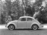 Volkswagen Beetle 1962–68 images